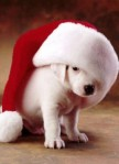 funny-cute-puppy-wearing-a-santa-hat-291x400